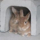 【ウサギ舎】ネザーランドドワーフという小さなうさぎが3匹仲間入り。以前からいるイエウサギも一緒に見ることができます。