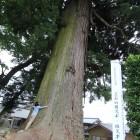 長野県天然記念物「立石の雄杉・雌杉」散歩コース